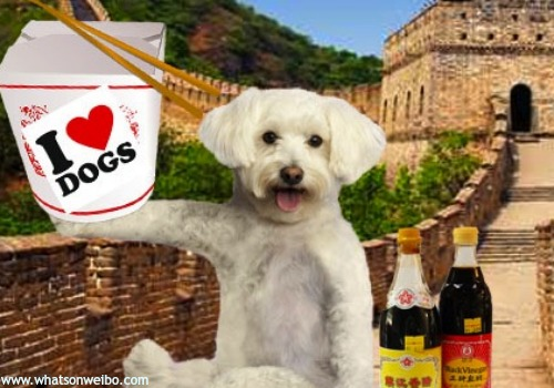 20 Facts About Dogs Dog Eating In China Whats On Weibo