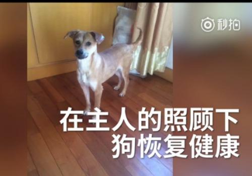 dog sudden death