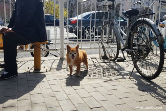 20 Facts About Dogs & Dog-Eating in China | What's on Weibo
