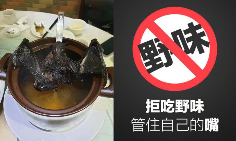 Image result for coronavirus animals china